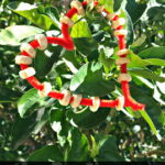Heart Pipe Cleaner Bird Feeder Craft For Kids