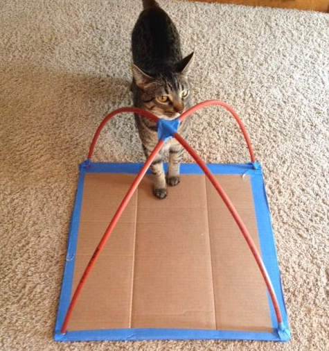Diy cat tent made with t shirts and cardboard crafty morning for Cat tent