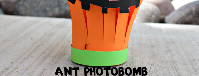 ant-photobomb