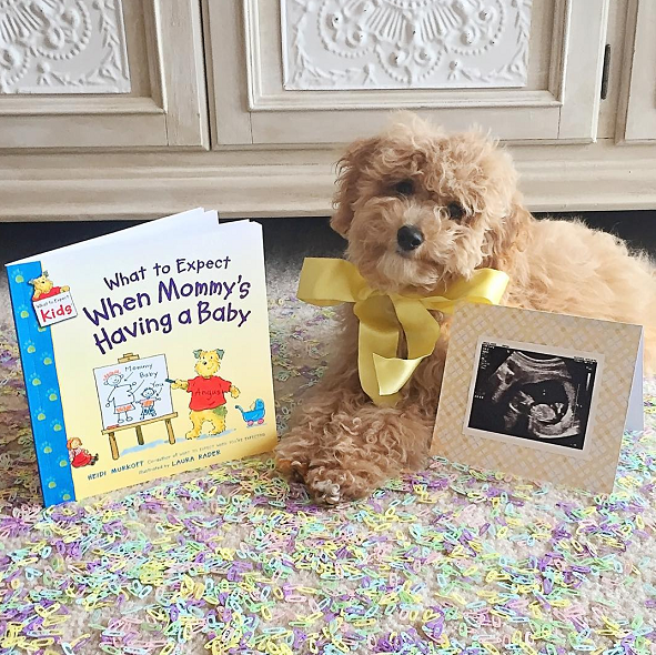 Dog Big Sister Announcement