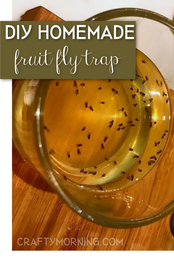 The Best Homemade Fruit Fly Trap Crafty Morning