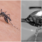 Unusual but Effective Ways to Get Bug Bites to Stop Itching