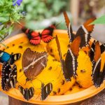 9 Ways to Invite Butterflies into Your Garden