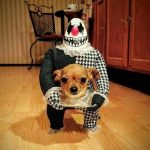 The Best Homemade Dog Halloween Costumes