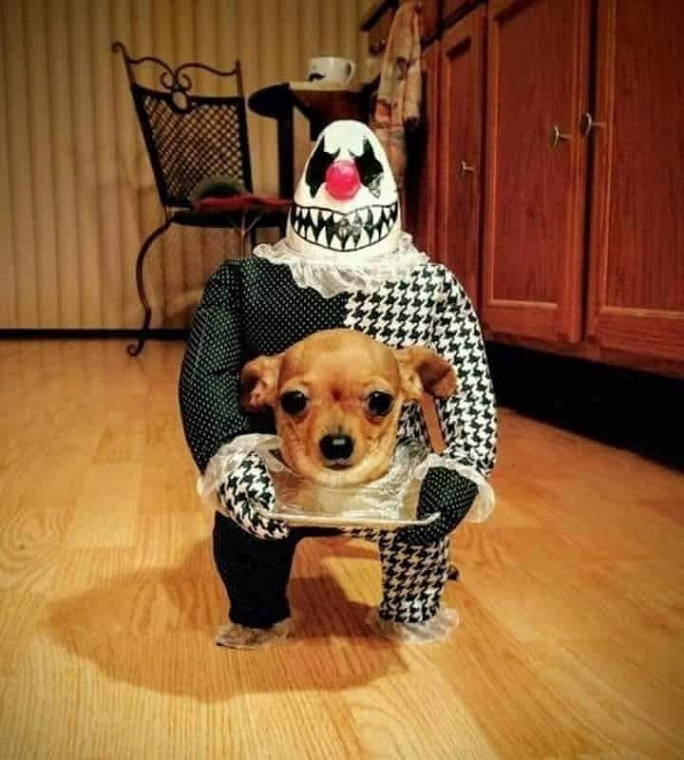 The Best Homemade Dog Costumes Crafty Morning