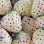 Pineberries: Delicious strawberries that have a sweet pineapple flavor